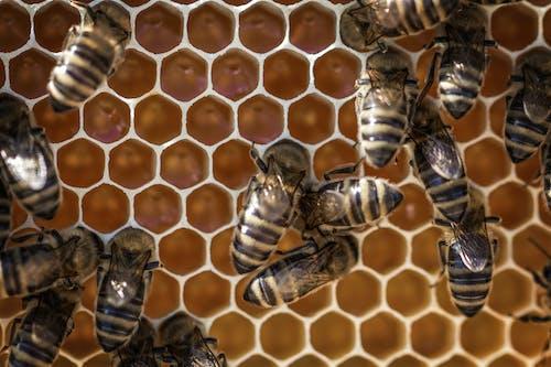六邊形, 動物, 宏觀, 巢 的 免費圖庫相片