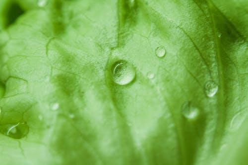 Foto d'estoc gratuïta de aigua, clorofil, frescor, gotes de pluja