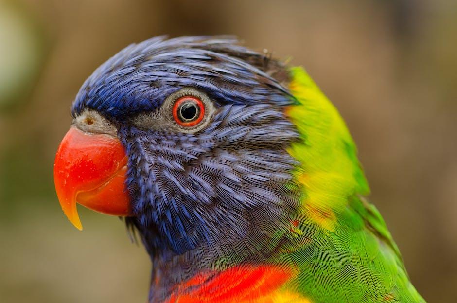 Kadavu parrot - Fiji wildlife