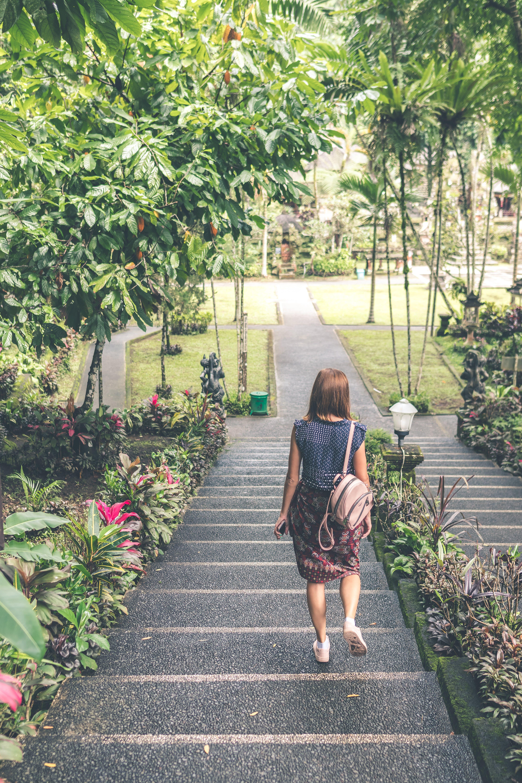 คลังภาพถ่ายฟรี ของ กลางวัน, การเดิน, ฉาก, ต้นไม้