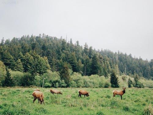 Fotos de stock gratuitas de animales, arboles, bosque, campo