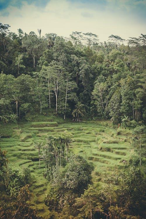 activități agricole, agricultură, arbori