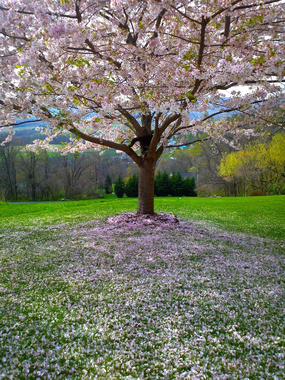 dream sybol the tree