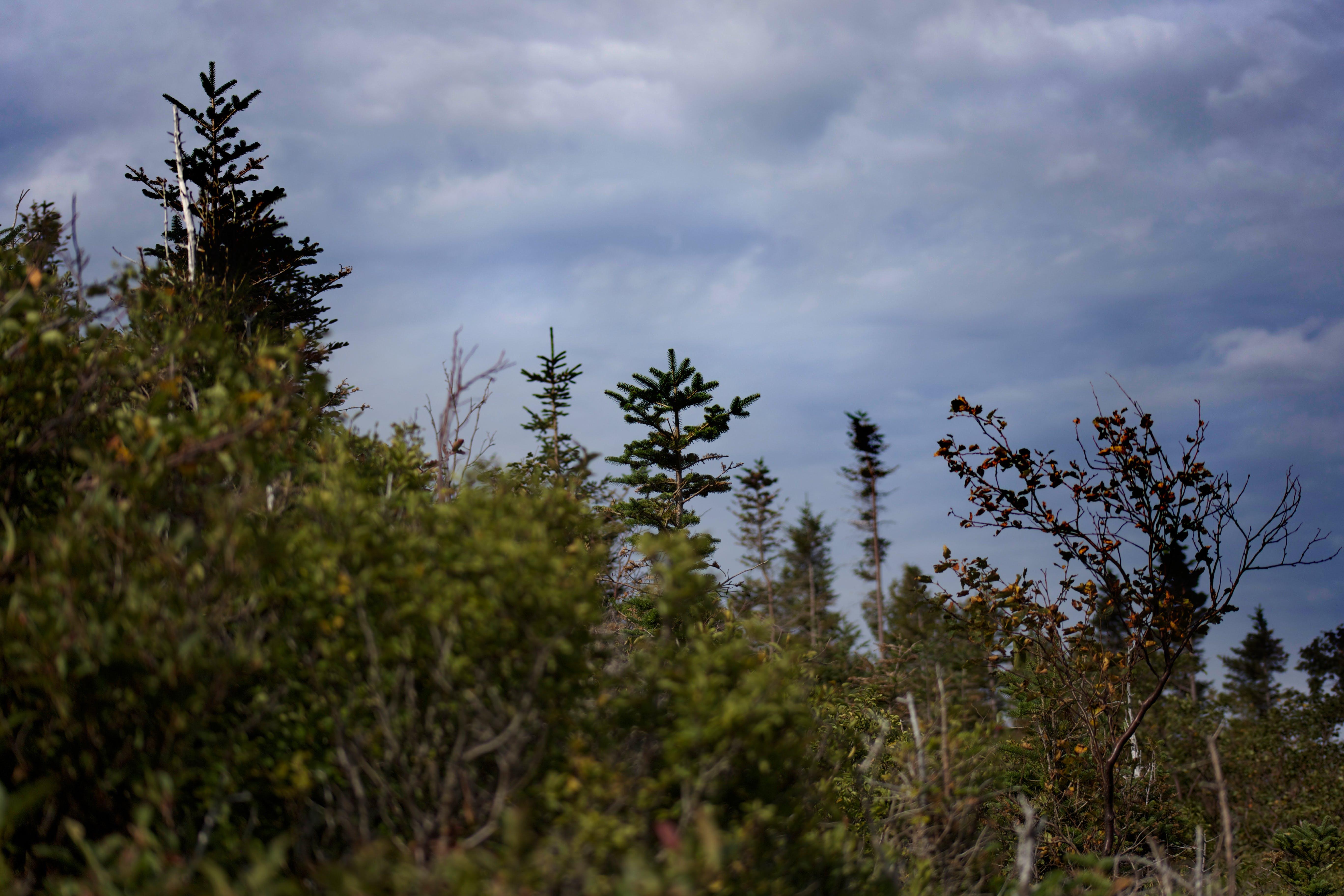 Kostenloses Stock Foto zu natur, himmel, wolken, bäume
