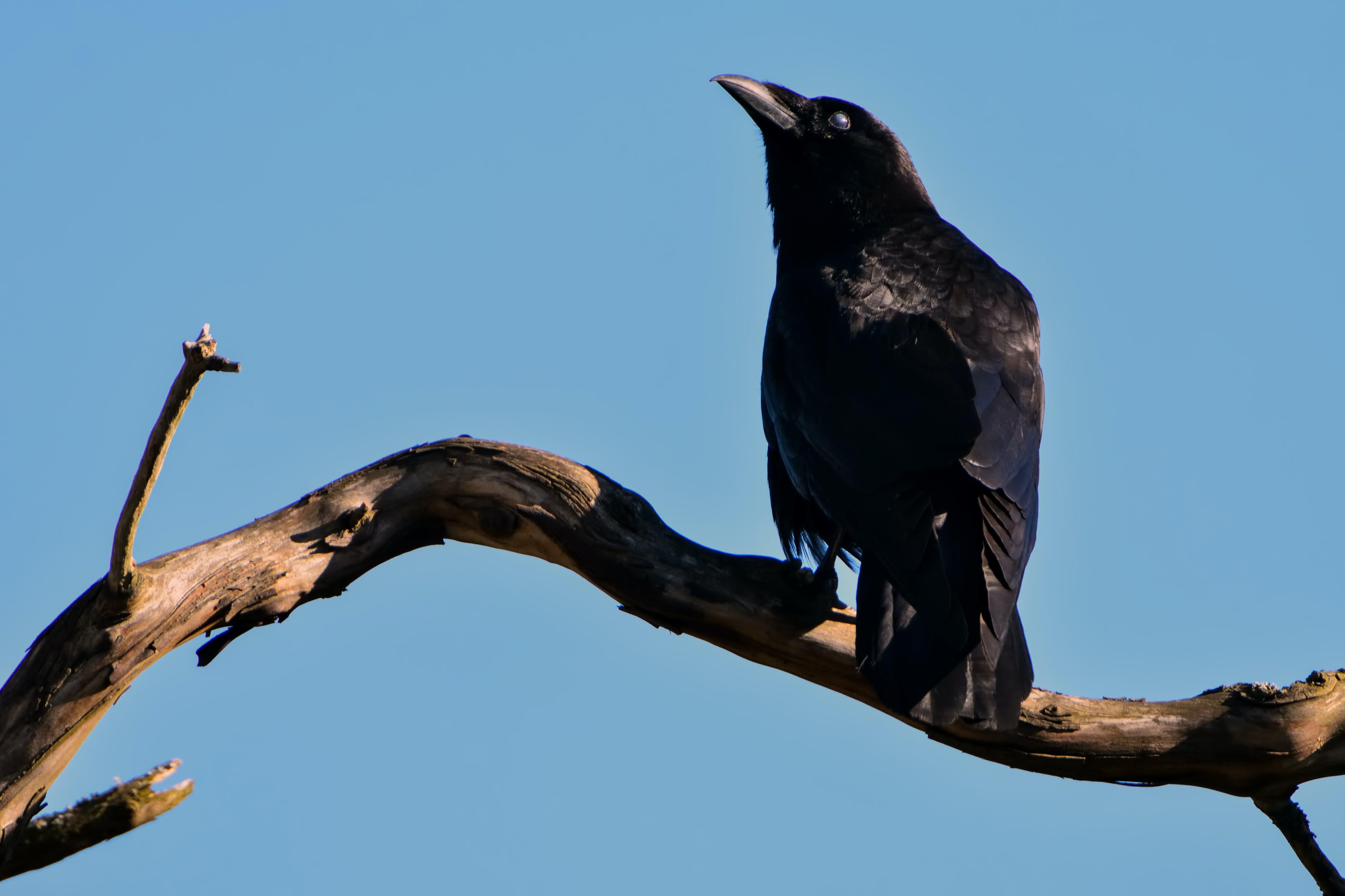 Black Bird on Top of Brown Driftwood