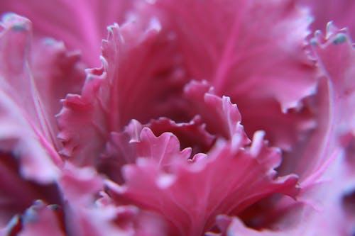 Immagine gratuita di bellissimo, concentrarsi, delicato, fiore