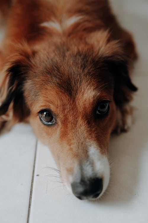 Evcil Hayvan, Evcil Hayvanlar, kahverengi gözler içeren Ücretsiz stok fotoğraf