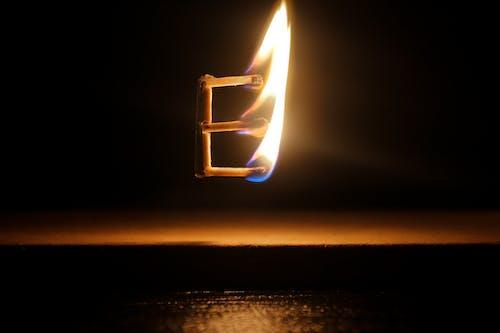 Free stock photo of adobe photoshop, animal photography, bonfire