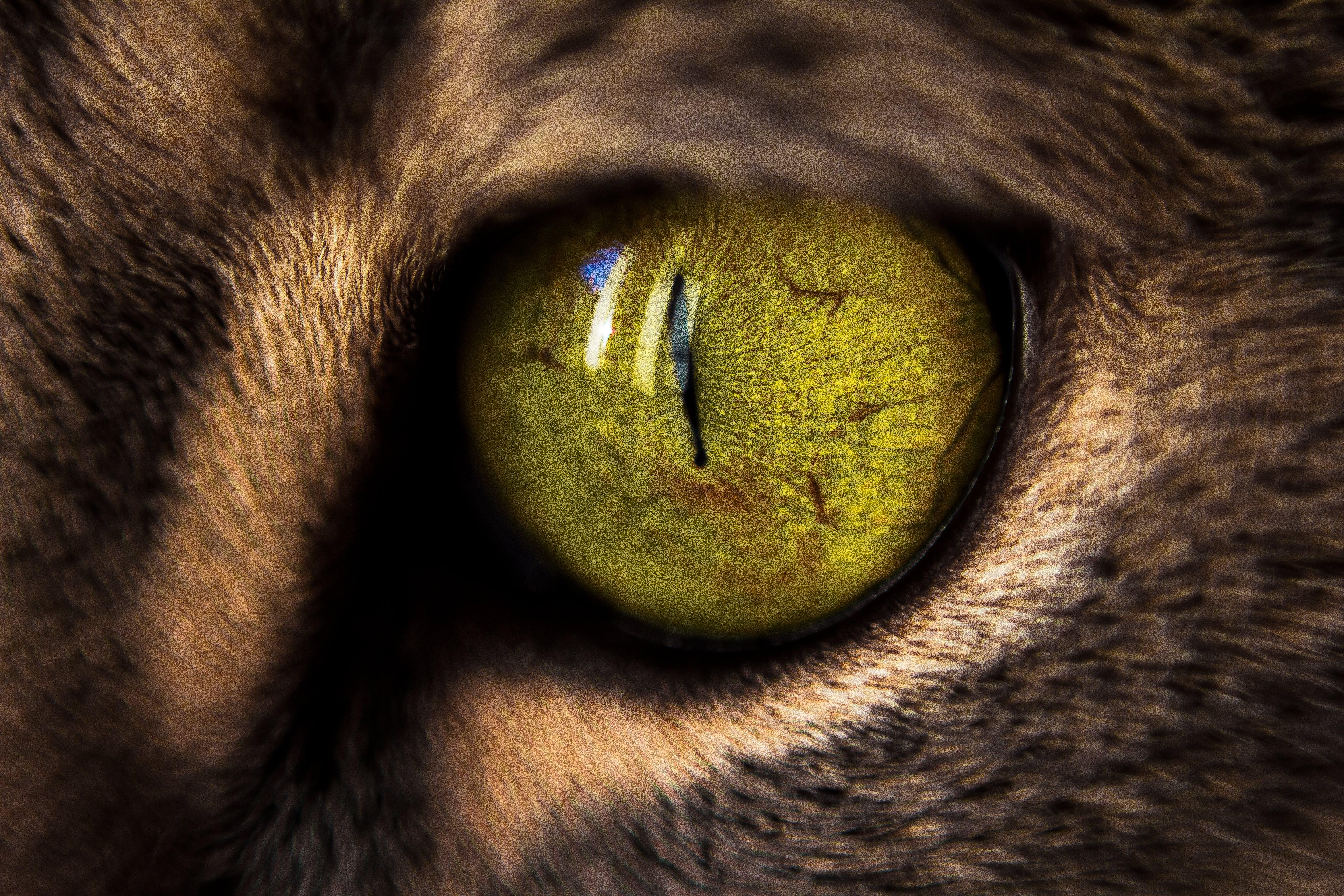 Macro Photography of Green Cat's Eye
