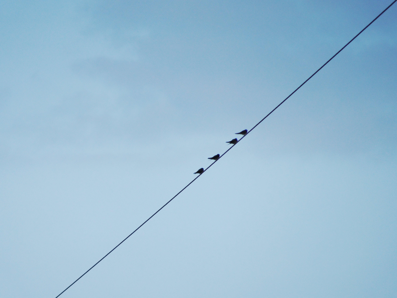 Free stock photo of alive, bird, blue, minimal
