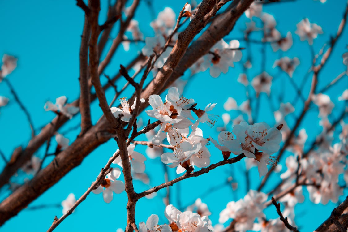campanula, fiore, fiori artificiali