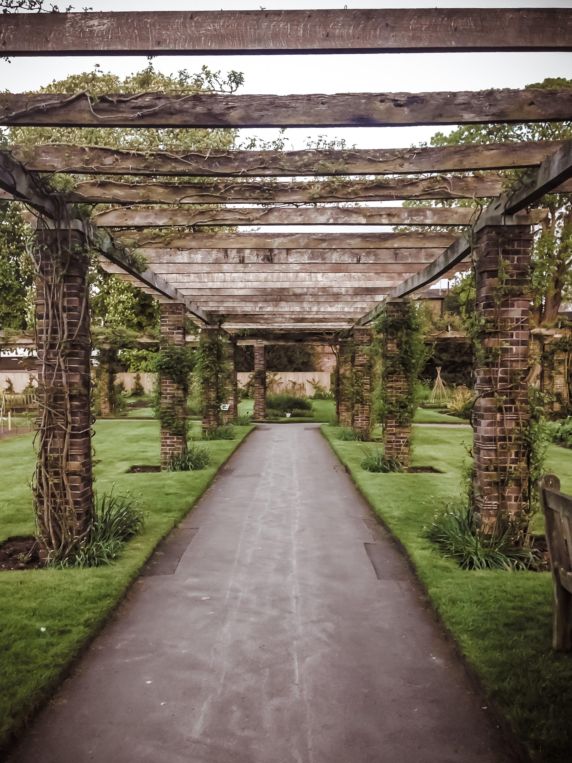 Free stock photo of landscape, nature, pattern, garden