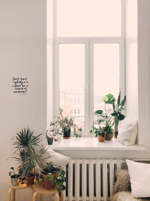 1000 Amazing Indoor Plants Photos Pexels Free Stock