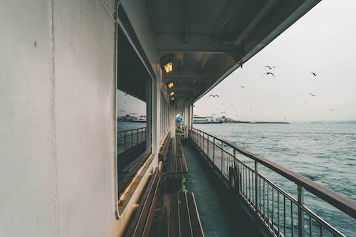 Ingyenes stockfotó fények, hajó, hullámok, komp témában