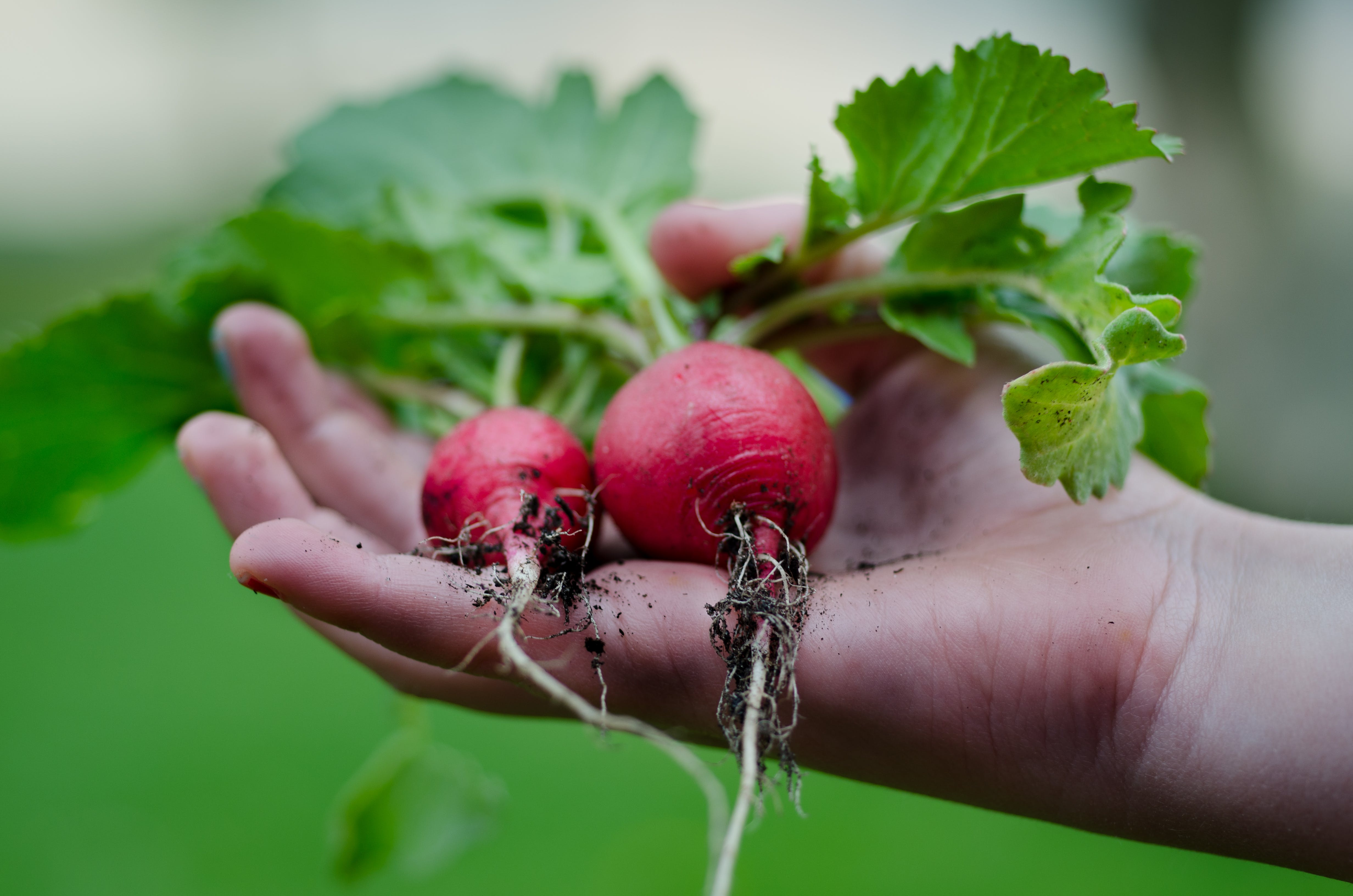 gardening, hand, harvest