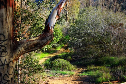 Free stock photo of nature, nature park, nature trail, shrubs
