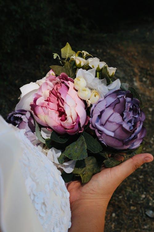 Gratis arkivbilde med blader, blomster, blomsterblad