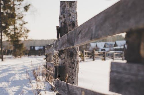 Foto profissional grátis de árvores, branco, cerca, cerca de madeira