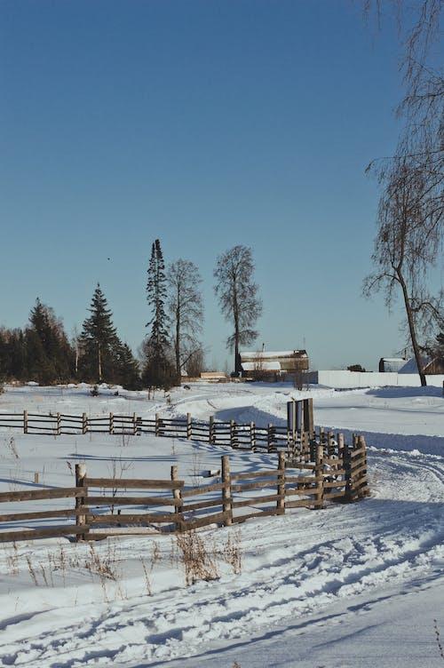 Бесплатное стоковое фото с белоснежный, голубое небо, деревья, деревянный