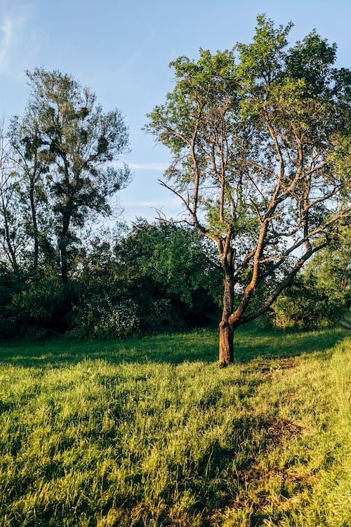 Foto profissional grátis de Alemanha, ao ar livre, árvores