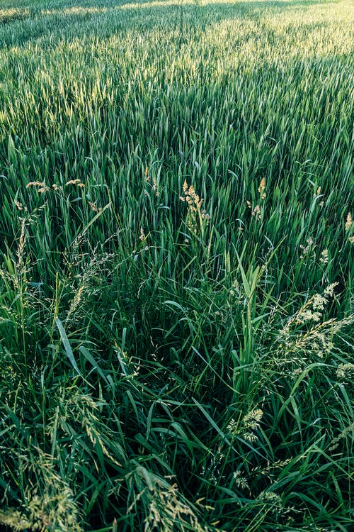 Foto profissional grátis de agricultura, alegre, Alemanha