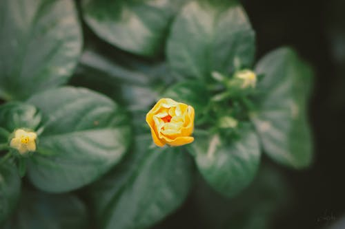 Free stock photo of beautiful flower, dark green, flower background