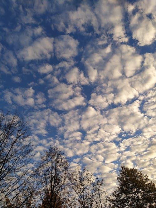 Immagine gratuita di cielo nuvole, forma di nuvole, formazione delle nuvole