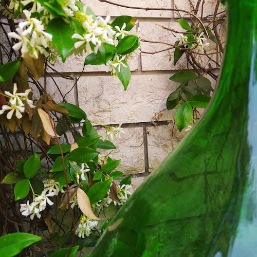 Immagine gratuita di fiori, fiori bianchi, fotografia di fiori