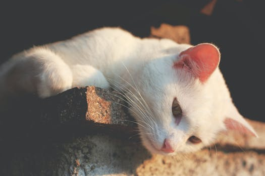 White Cat Leaning on Brown Concrete in Macro Shot Photography