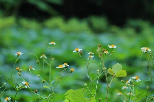 Foto d'estoc gratuïta de flors boniques, herba