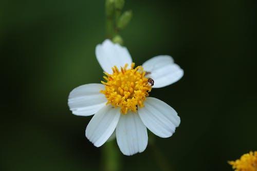 Foto d'estoc gratuïta de flor, primer pla