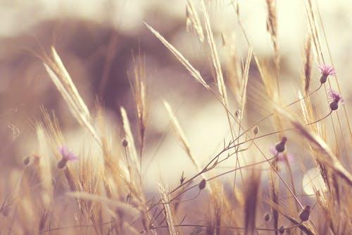 Ảnh lưu trữ miễn phí về ánh sáng, Bo mạch, cánh đồng, cây lâu năm