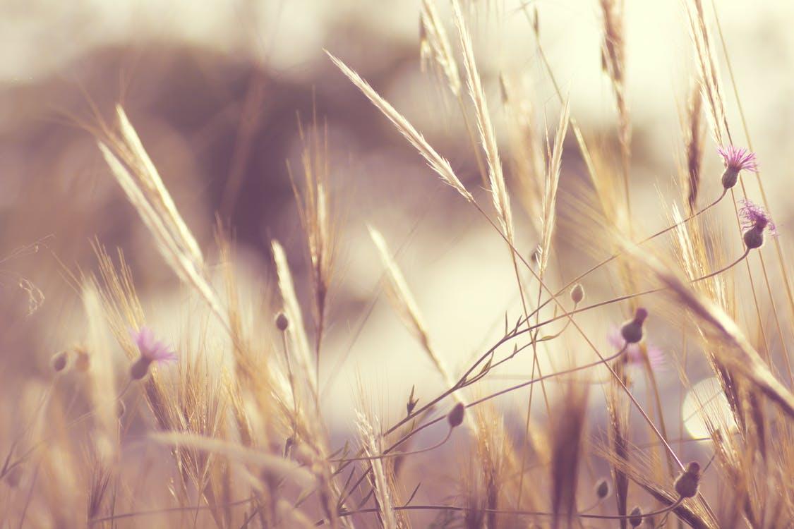 bloemen, fabrieken, gras