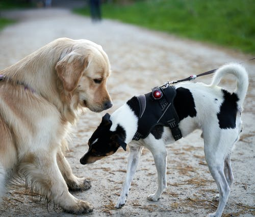 Two Dogs Facing Each Other