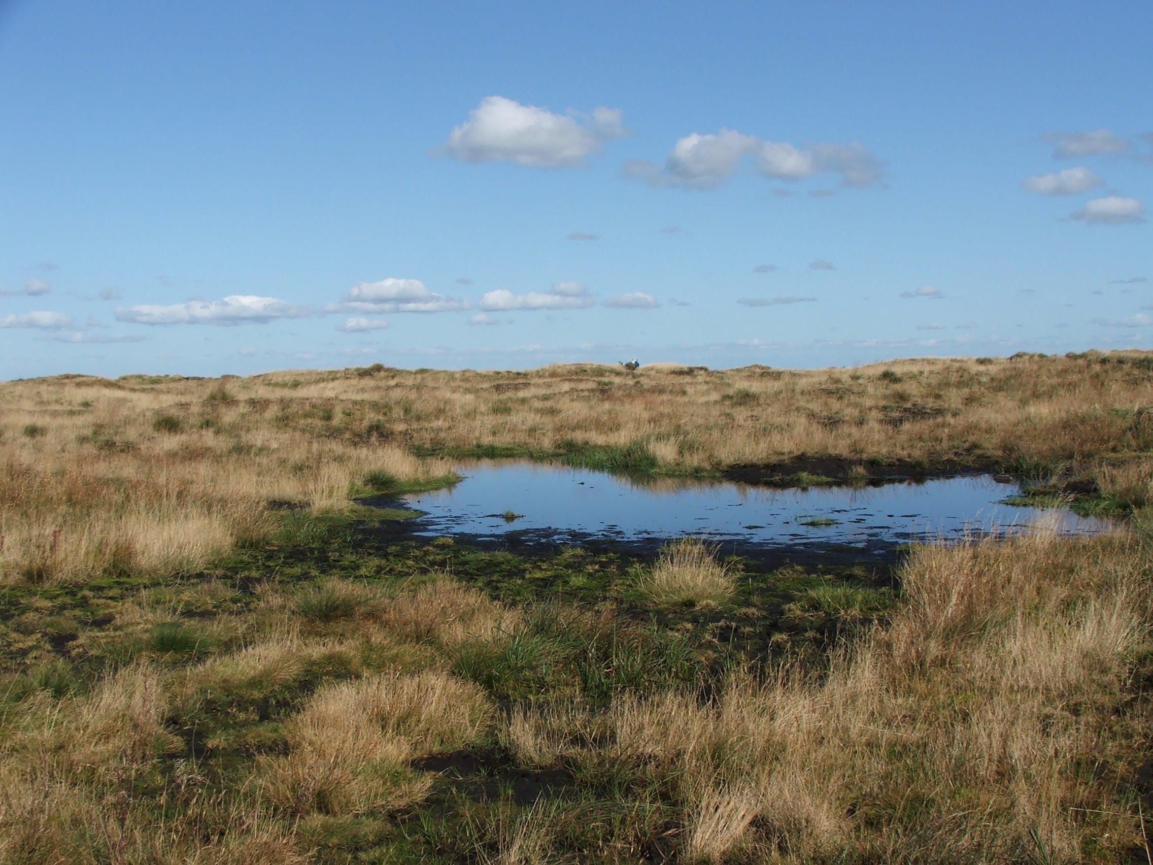 Free stock photo of horizon, moorlands, moors