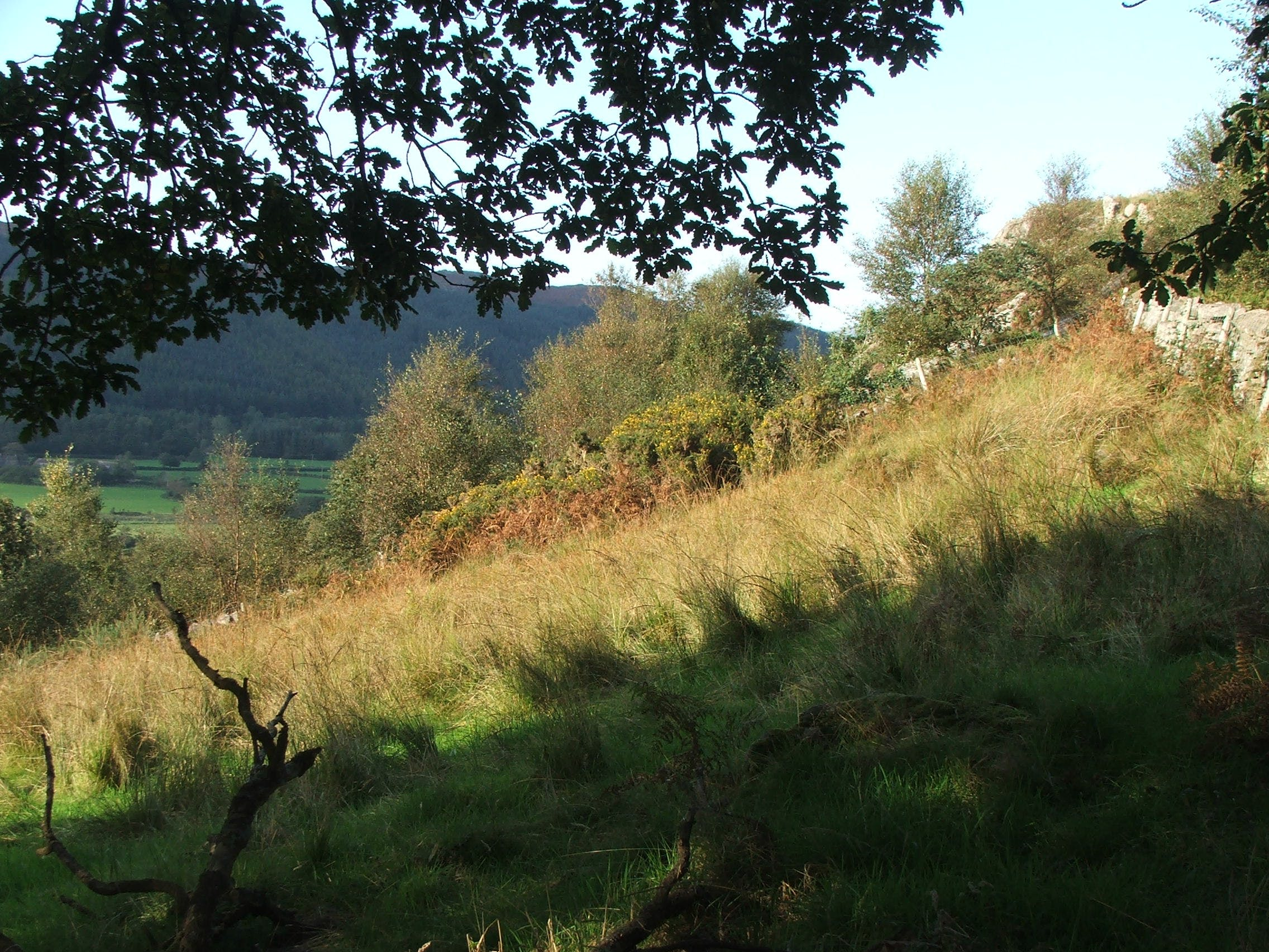 Free stock photo of field, pasture