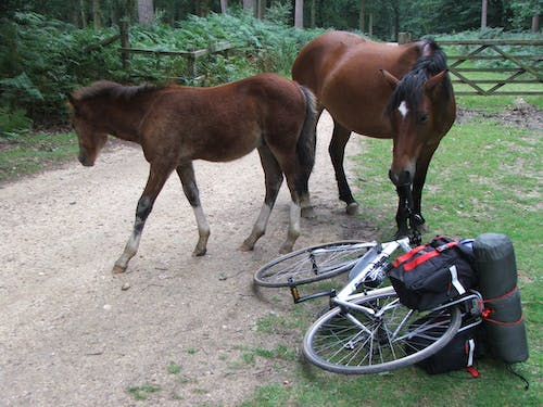 Free stock photo of bicycle, explore, mare and foal