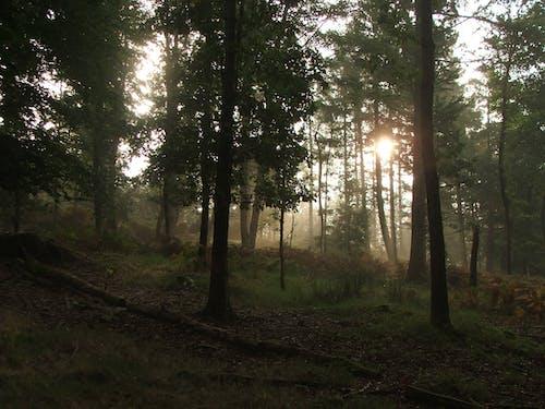 Free stock photo of forest, shine through, sun