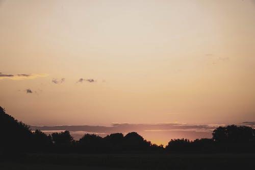 골든 아워, 나무, 새벽의 무료 스톡 사진
