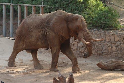 動物, 哺乳類, 巨大の無料の写真素材