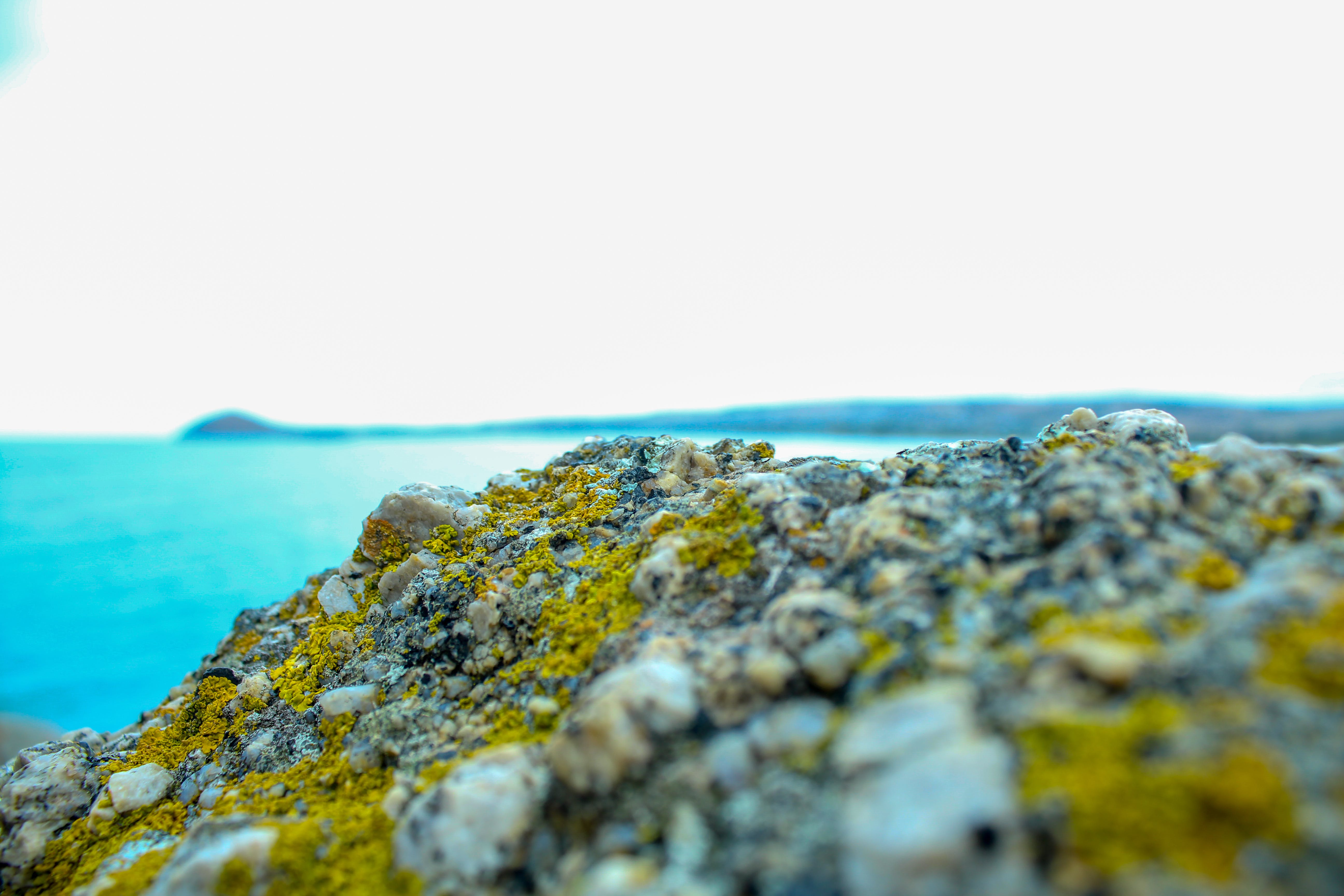 Shallow Photo of Rock Covered With Moss