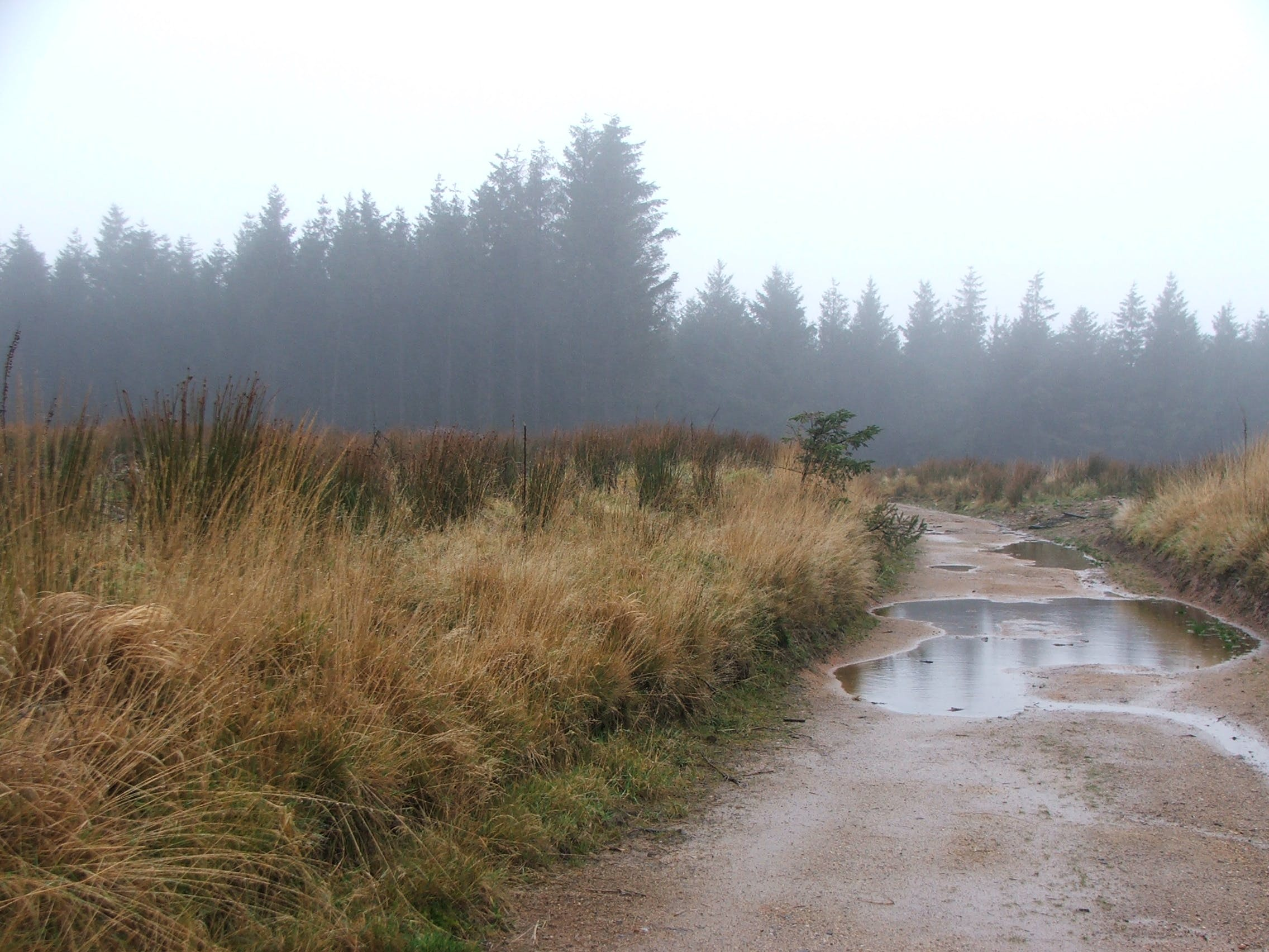 Free stock photo of dartmoor, inclement weather, moors, puddle