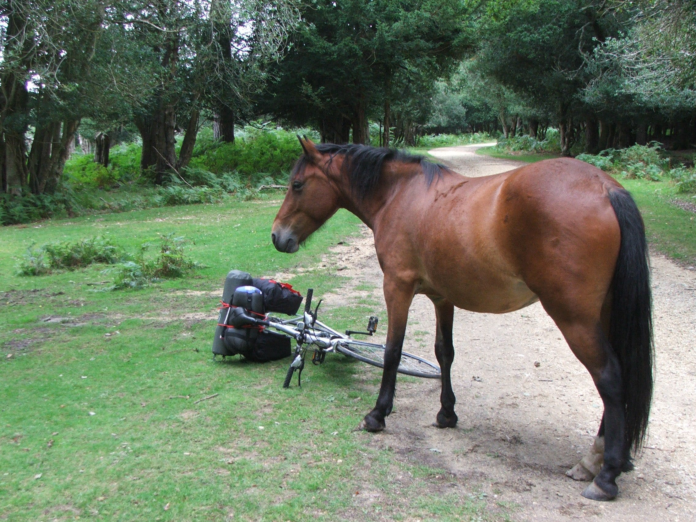 Free stock photo of bicycle, horse, mare, new forest pony