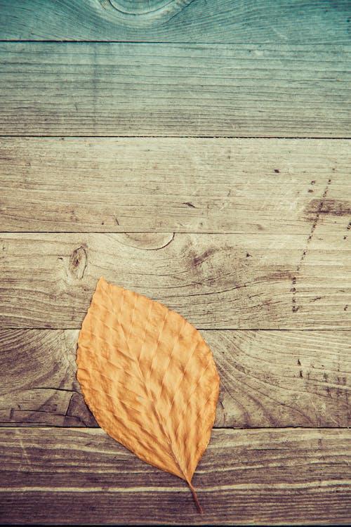 Free stock photo of autumn foliage, autumnally, background, brown