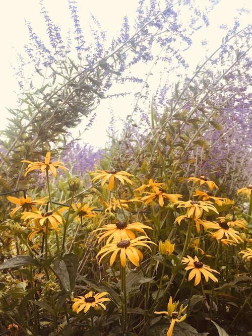 Free stock photo of flowers, purple, wildflowers