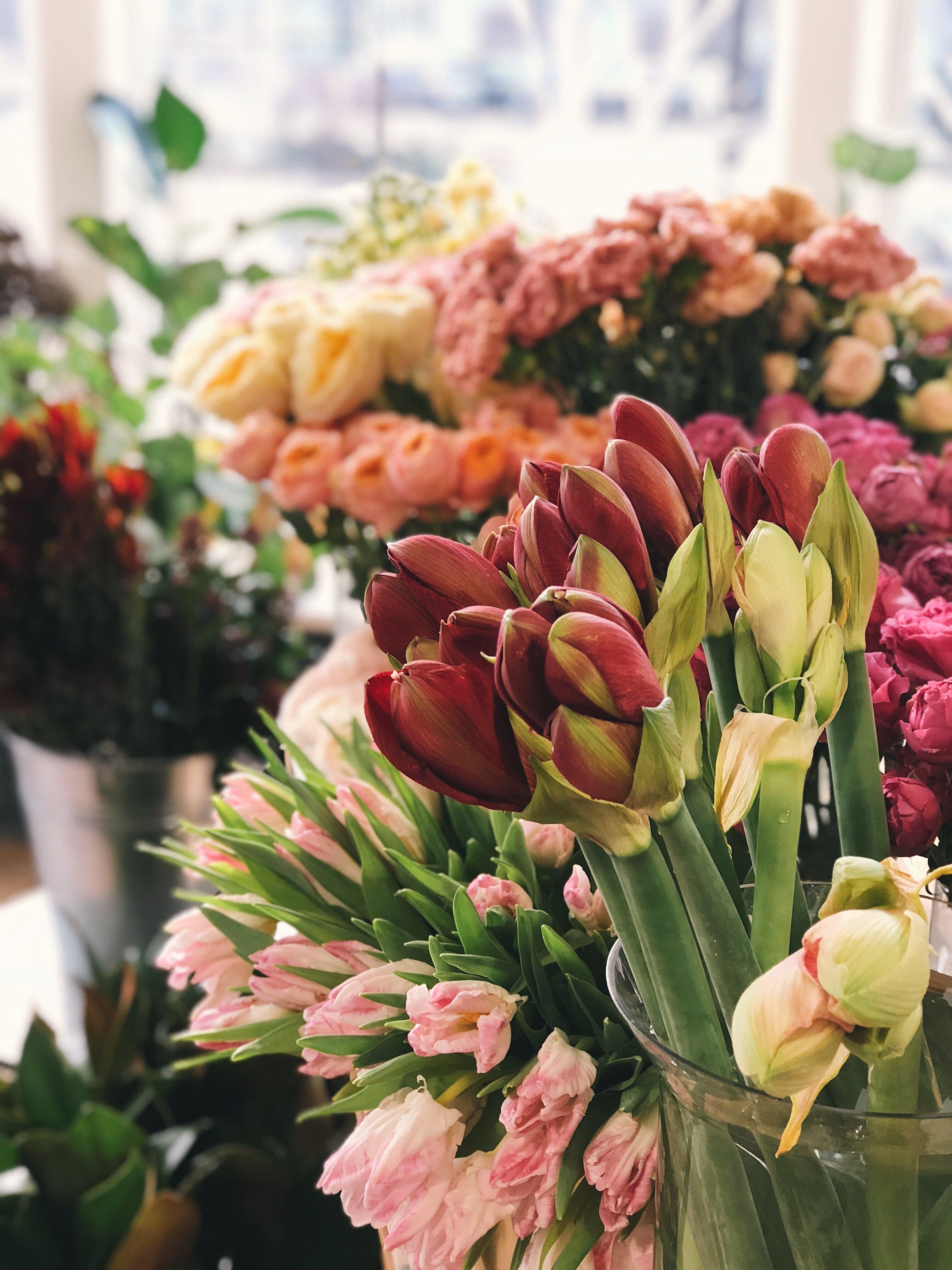 aranžování květin, barevný, čerstvý