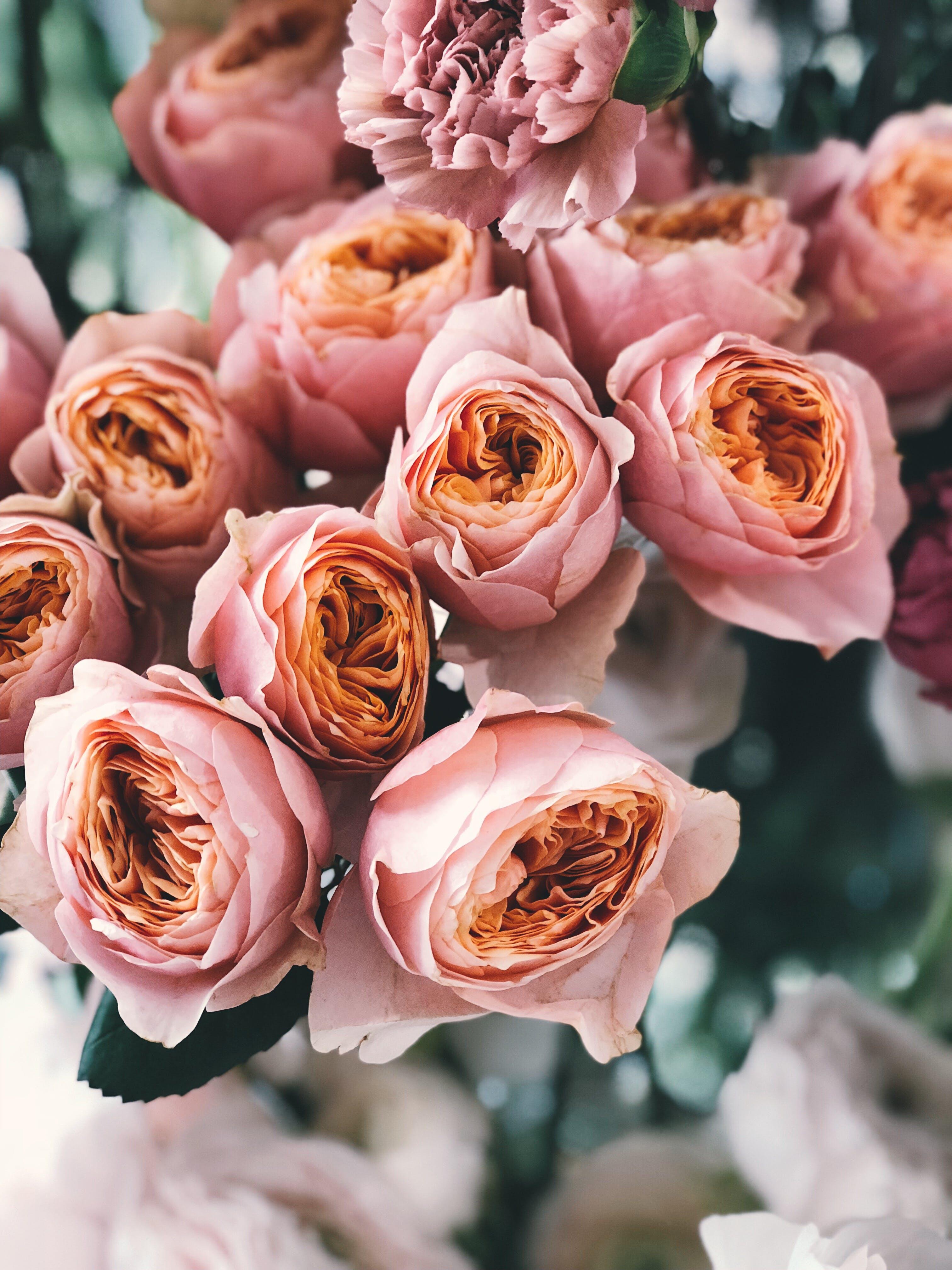 Pink Rose Flower Bouquet