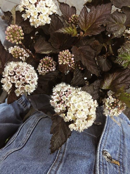 Darmowe zdjęcie z galerii z delikatny, dżins, flora, gromada