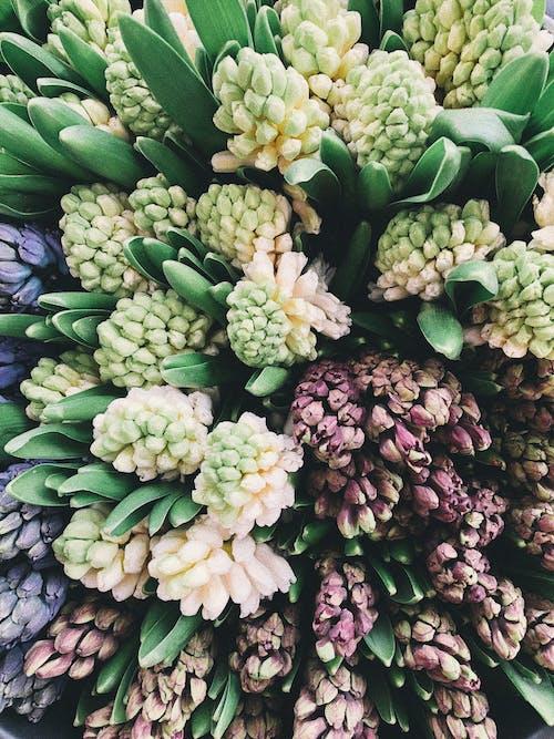Gratis lagerfoto af blomster, blomstrende, Botanisk, farve