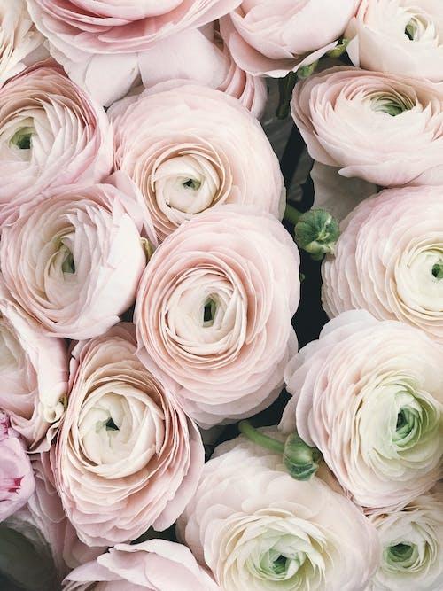 Gratis arkivbilde med blomst, blomster, blomsterarrangement, blomsterblad